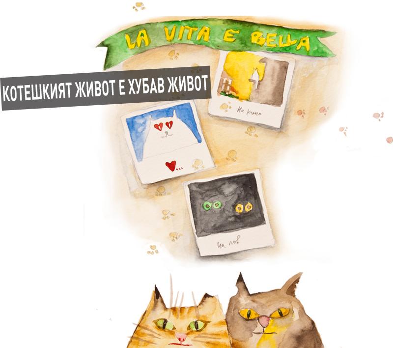 catlife-B